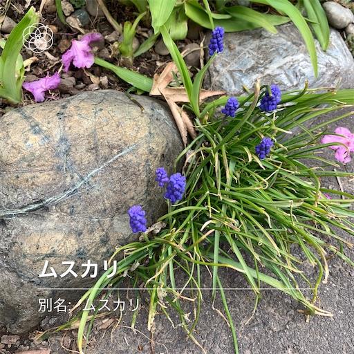 f:id:hazakura60:20210505093043j:image