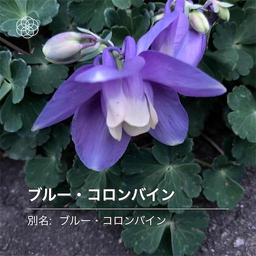 f:id:hazakura60:20210508195059j:image