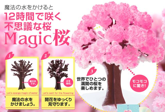 みんなが喜ぶmagic桜