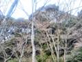 [冬][枯れ木]冬の木々