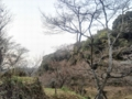 [冬][枯れ木]枯れ木も山の賑わい2012.1.9