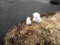 [雪][冬]溶けかけの雪だるま