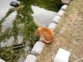 [猫][萩]松陰神社でネコ発見!①2012.4.5