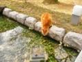 [猫][萩]松陰神社でネコ発見!!②2012.4.5