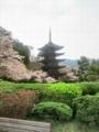 [桜][五重塔][山口県]桜咲く瑠璃光寺五重塔2012.4.5