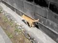 [猫]青海島にて発見2012.6.20