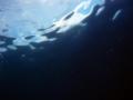 [海][ダイビング]ダイビング2012.9.21⑨