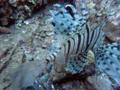 [海][ダイビング]ダイビング2012.9.21⑧