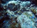 [海][ダイビング]ダイビング2012.9.21⑥
