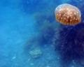 [海][ダイビング]ダイビング2012.9.21④