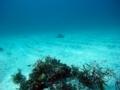 [海][ダイビング]ダイビング2012.9.21③
