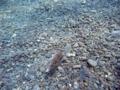[海][ダイビング]2012.9.21①