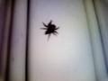 市ヶ谷近辺の休業中蕎麦屋さんの蜘蛛