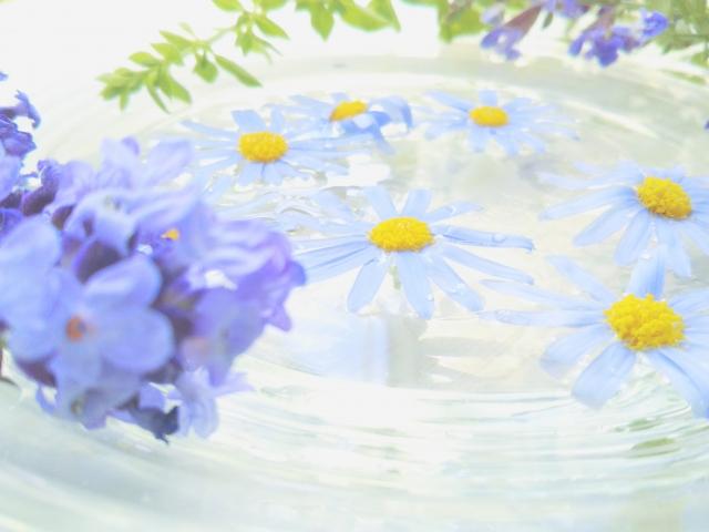 f:id:healing-jasmine:20210723211852j:plain
