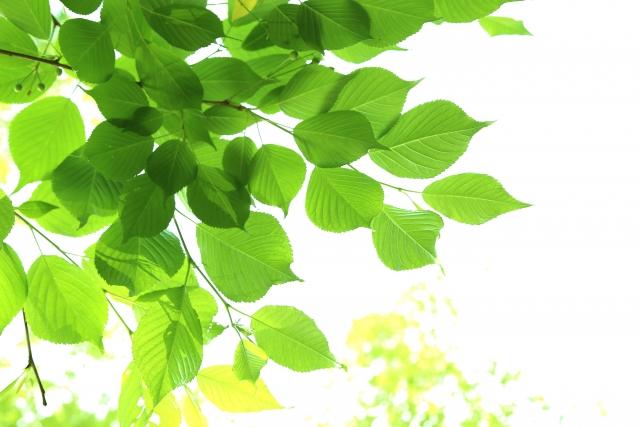 f:id:healing-jasmine:20210726093040j:plain