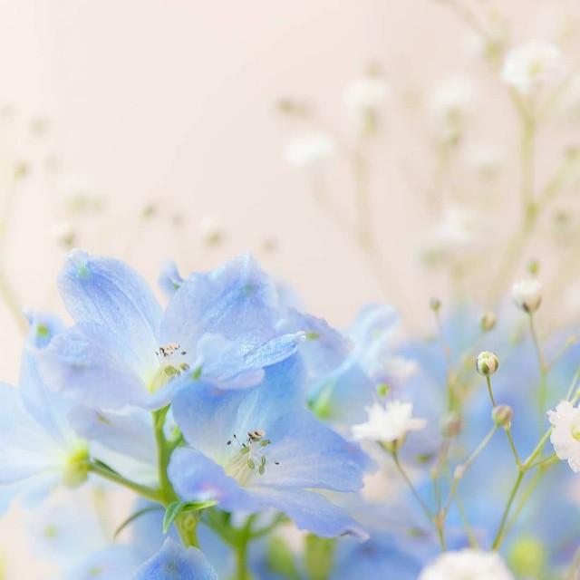 f:id:healing_yui:20210220205216j:image