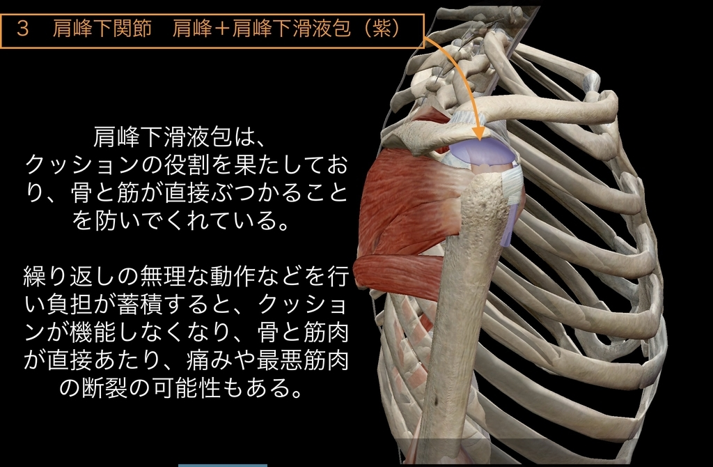 f:id:health--life:20181206210606j:plain