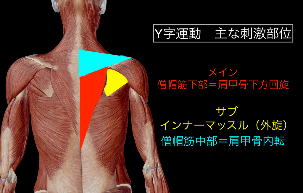 f:id:health--life:20181214111622j:plain
