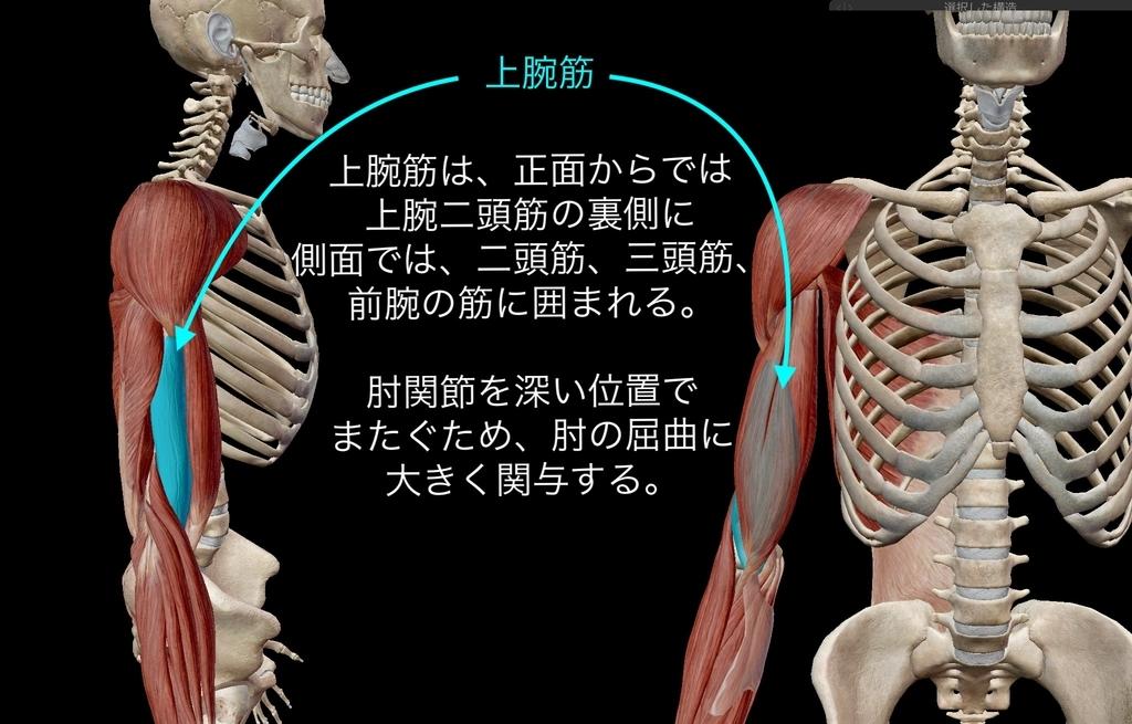 f:id:health--life:20181223143423j:plain