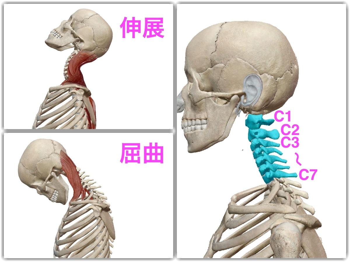 f:id:health--life:20190421123603j:plain