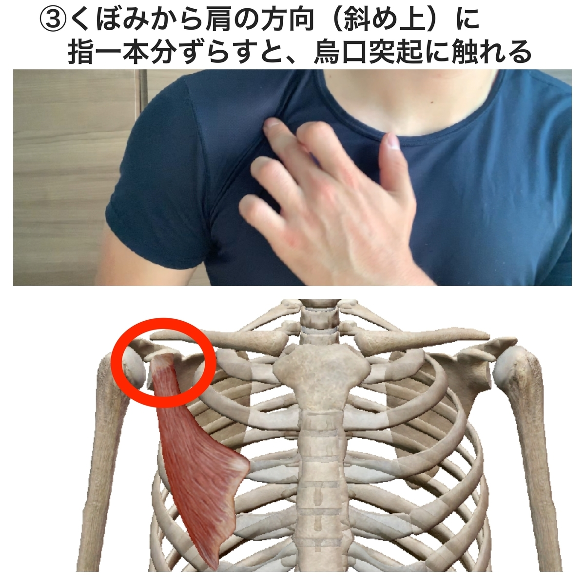 f:id:health--life:20190524145855j:plain