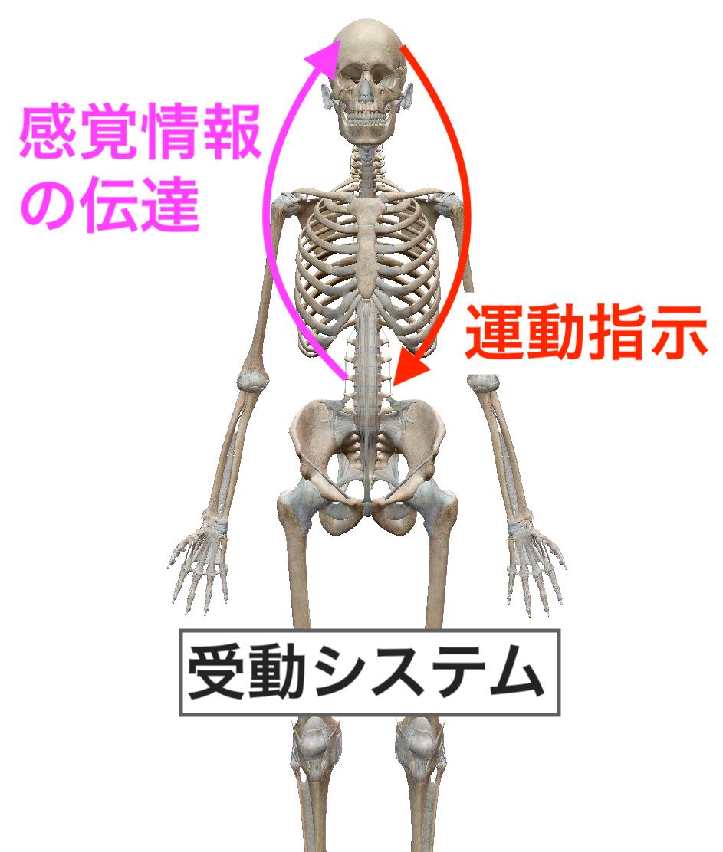 f:id:health--life:20190627110904p:plain