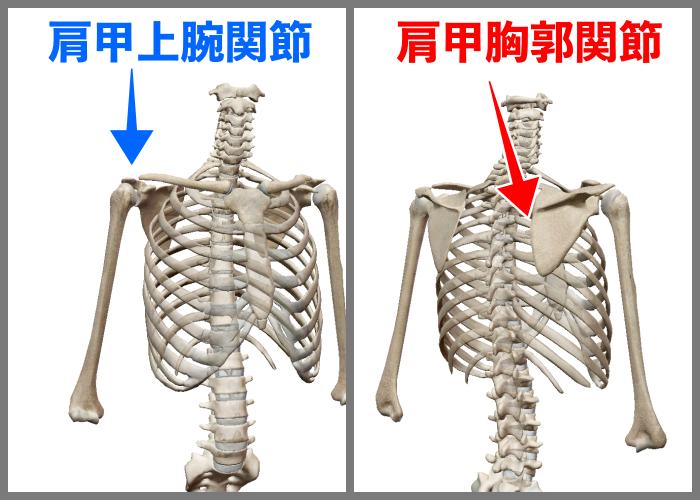 f:id:health--life:20200830183046p:plain