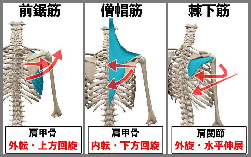 f:id:health--life:20200830194236p:plain