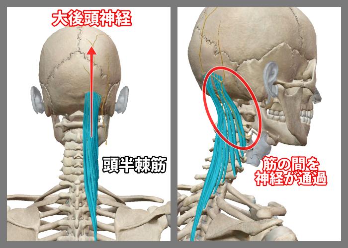 f:id:health--life:20200903163958p:plain