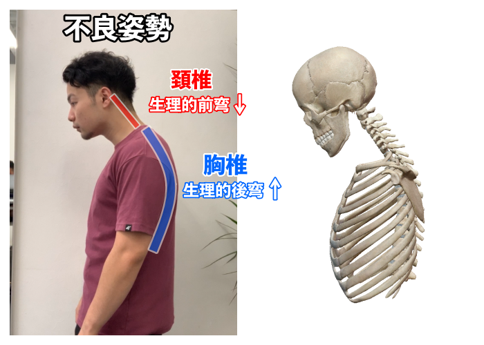 f:id:health--life:20200909150922p:plain