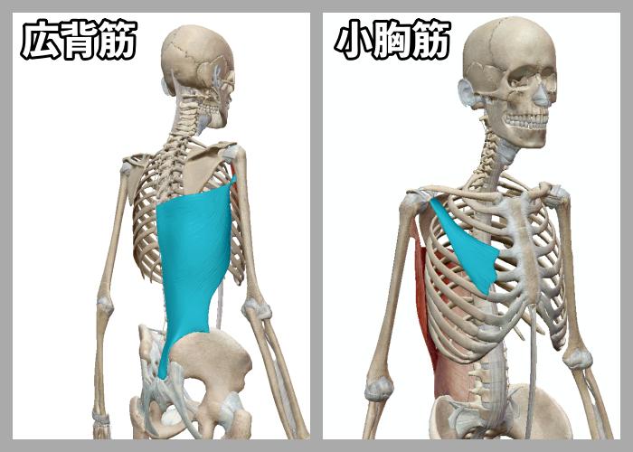 f:id:health--life:20200911172240p:plain