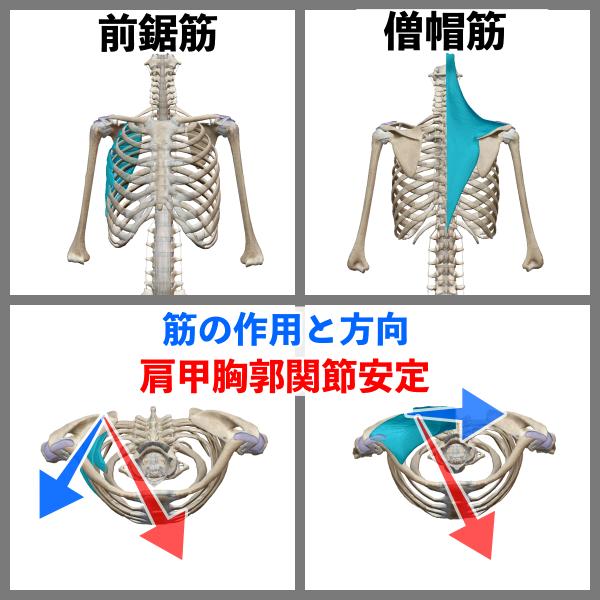 f:id:health--life:20200922135958p:plain