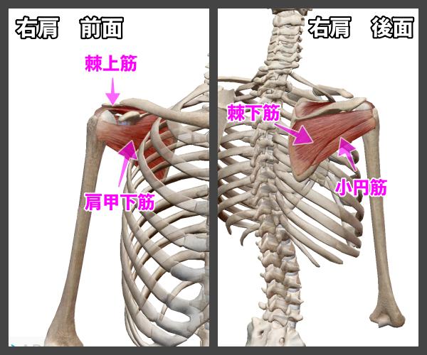 f:id:health--life:20210116124706p:plain