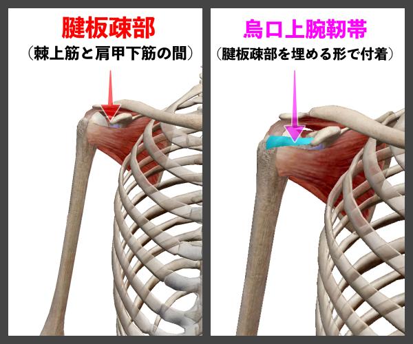f:id:health--life:20210116125310p:plain