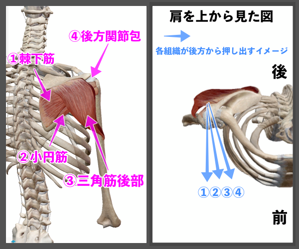 f:id:health--life:20210116193910p:plain