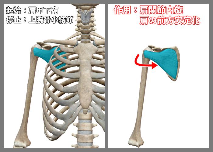 f:id:health--life:20210402093026p:plain
