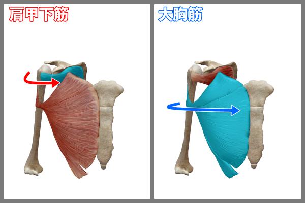 f:id:health--life:20210402094454p:plain