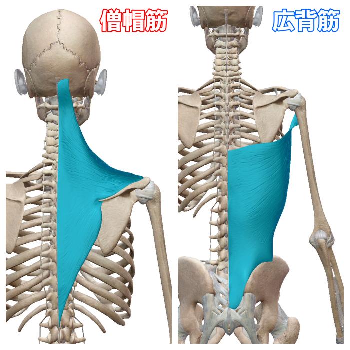 f:id:health--life:20210814100559p:plain