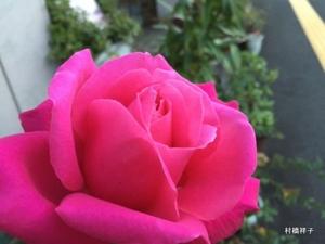 f:id:heartrose:20151118215916j:image