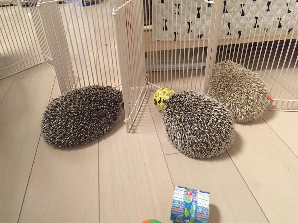 f:id:hedgehog_chacha:20160730232229j:image