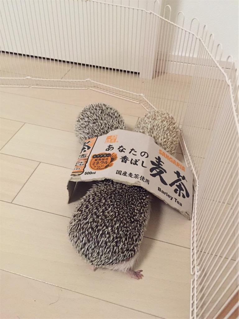 f:id:hedgehog_chacha:20160811232229j:image