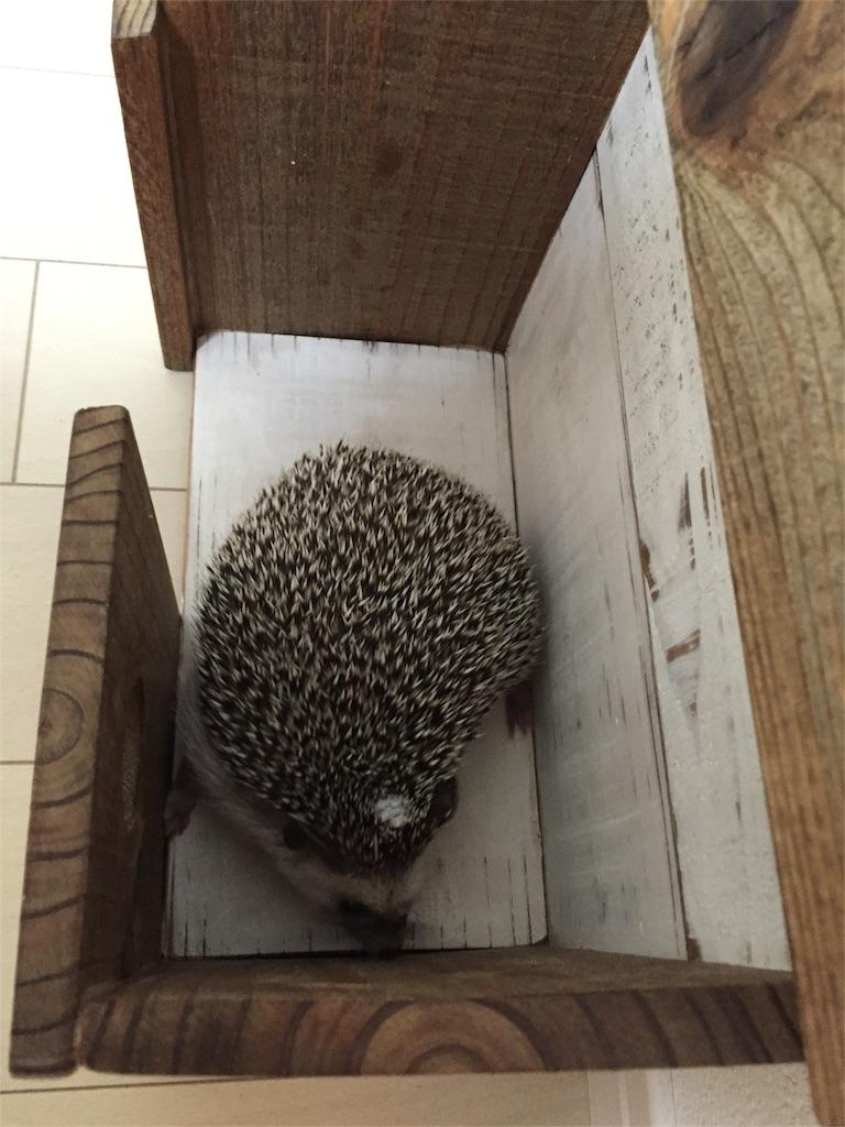 f:id:hedgehog_chacha:20160816212039j:image