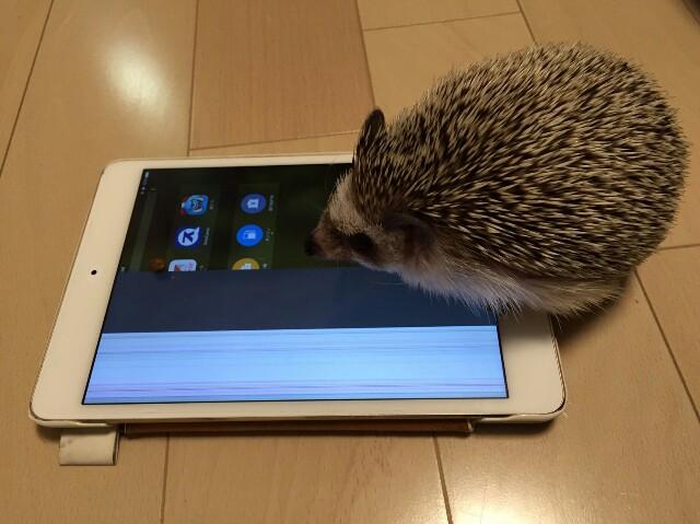 f:id:hedgehog_chacha:20160818144235j:image