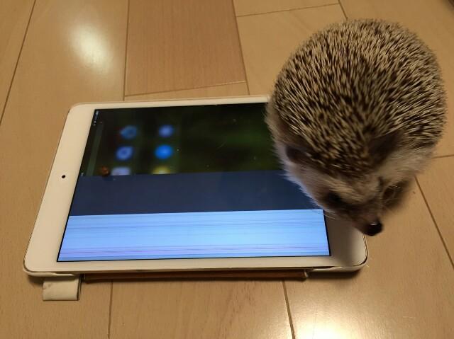 f:id:hedgehog_chacha:20160818150119j:image