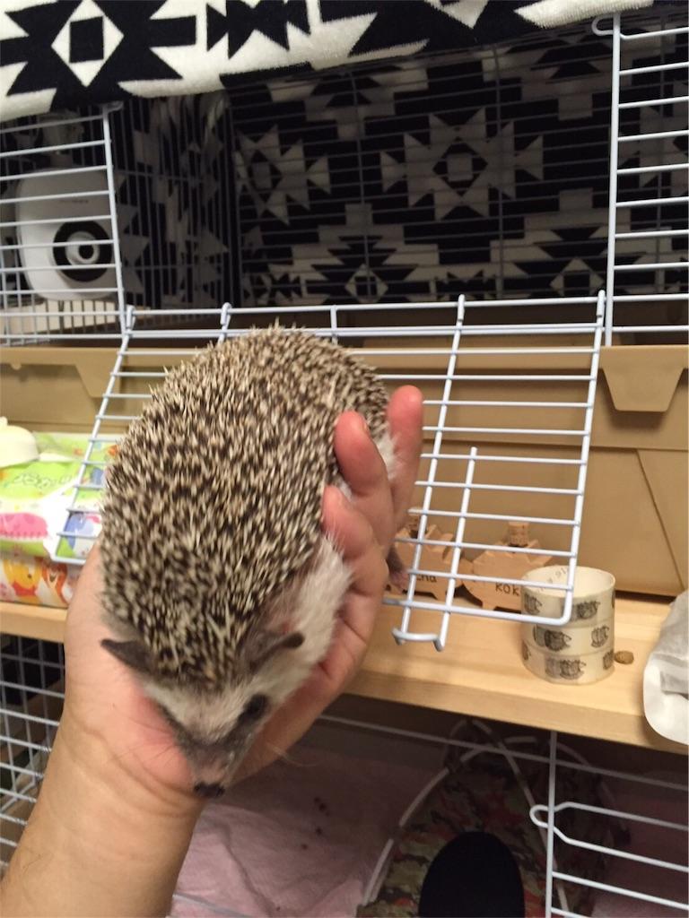 f:id:hedgehog_chacha:20160828203840j:image