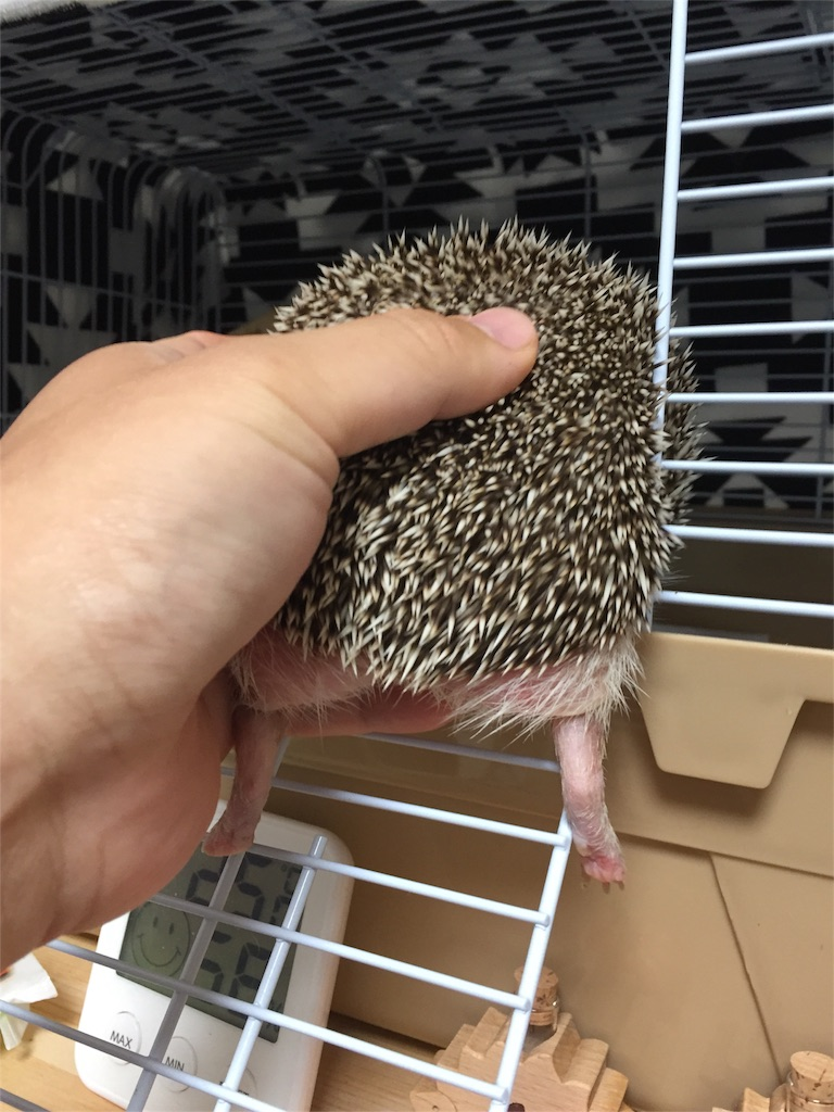 f:id:hedgehog_chacha:20161013211822j:image