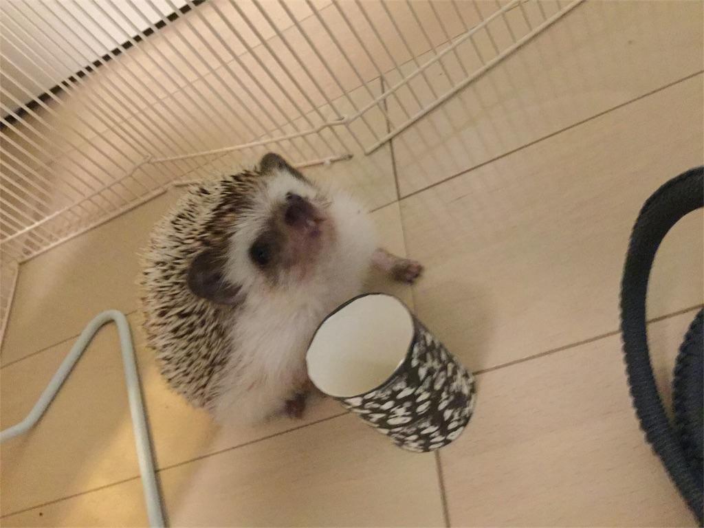 f:id:hedgehog_chacha:20161020102038j:image