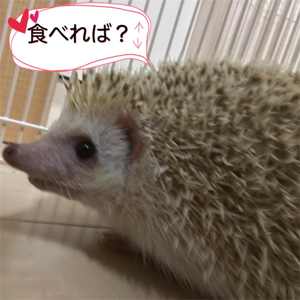 f:id:hedgehog_chacha:20161128201848j:image