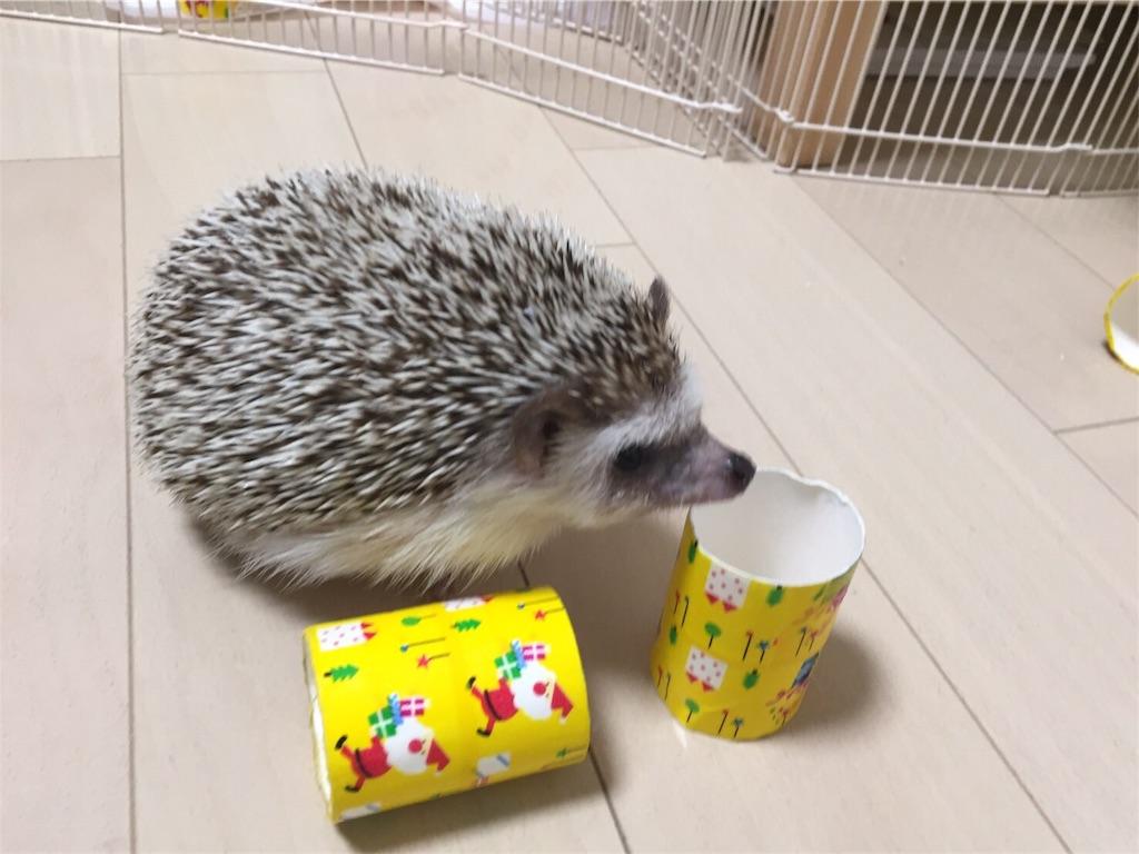 f:id:hedgehog_chacha:20161222222053j:image
