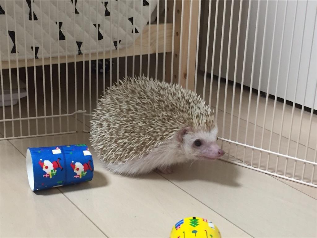 f:id:hedgehog_chacha:20161222222334j:image
